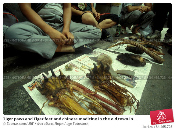 Tiger paws and Tiger feet and chinese madicine in the old town in... Стоковое фото, фотограф Zoonar.com/URF / age Fotostock / Фотобанк Лори