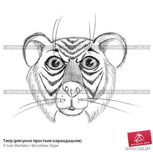 Тигр (рисунок простым карандашом), иллюстрация № 232237 (c) Василий Каргандюм / Фотобанк Лори