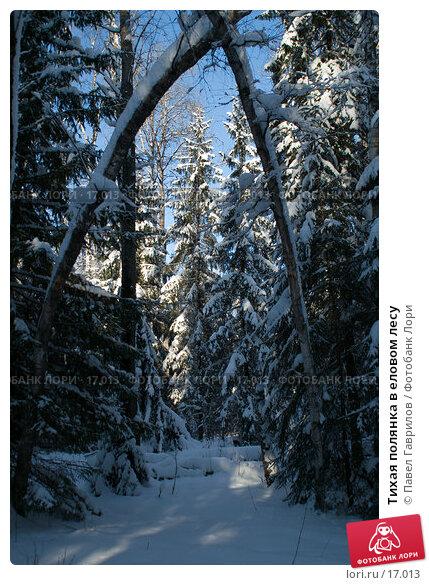Тихая полянка в еловом лесу, фото № 17013, снято 11 февраля 2007 г. (c) Павел Гаврилов / Фотобанк Лори