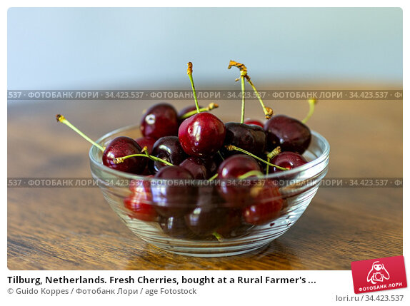 Tilburg, Netherlands. Fresh Cherries, bought at a Rural Farmer's ... Стоковое фото, фотограф Guido Koppes / age Fotostock / Фотобанк Лори