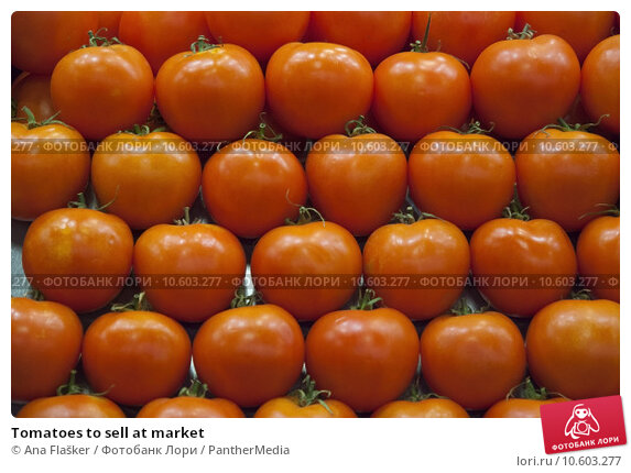 Tomatoes to sell at market. Стоковое фото, фотограф Ana Flašker / PantherMedia / Фотобанк Лори