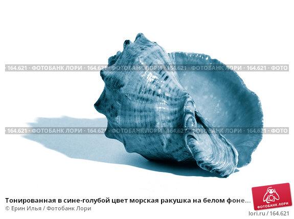 Тонированная в сине-голубой цвет морская ракушка на белом фоне..., фото № 164621, снято 2 января 2008 г. (c) Ерин Илья / Фотобанк Лори