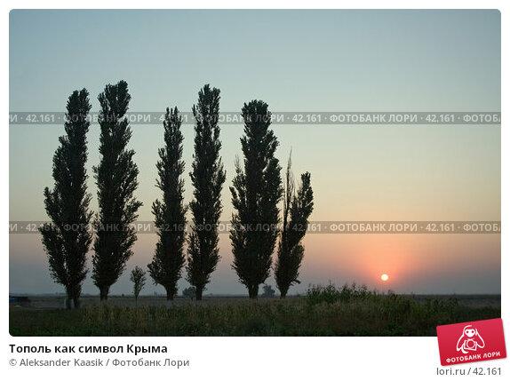 Тополь как символ Крыма, фото № 42161, снято 9 декабря 2016 г. (c) Aleksander Kaasik / Фотобанк Лори