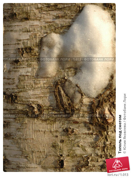 Тополь под снегом, фото № 1013, снято 1 марта 2006 г. (c) Юлия Яковлева / Фотобанк Лори