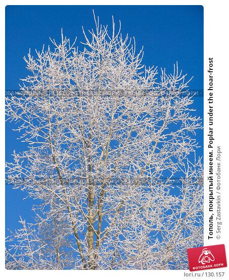Тополь, покрытый инеем. Poplar under the hoar-frost, фото № 130157, снято 18 декабря 2005 г. (c) Serg Zastavkin / Фотобанк Лори
