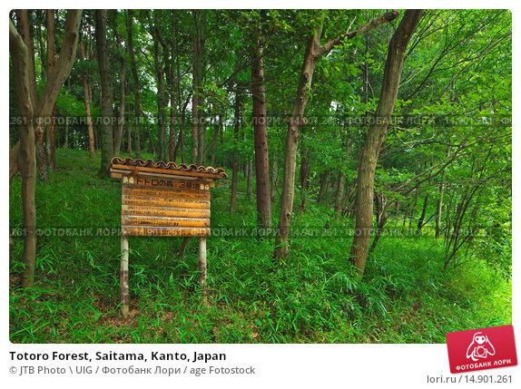 Купить «Totoro Forest, Saitama, Kanto, Japan», фото № 14901261, снято 19 июня 2018 г. (c) age Fotostock / Фотобанк Лори