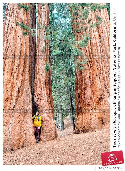 Купить «Tourist with backpack hiking in Sequoia National Park. California, United States.», фото № 34133941, снято 6 июля 2020 г. (c) easy Fotostock / Фотобанк Лори