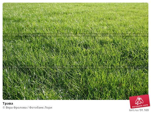 Трава, фото № 91169, снято 30 сентября 2007 г. (c) Вера Фролова / Фотобанк Лори