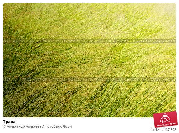 Трава, эксклюзивное фото № 137393, снято 17 июня 2007 г. (c) Александр Алексеев / Фотобанк Лори