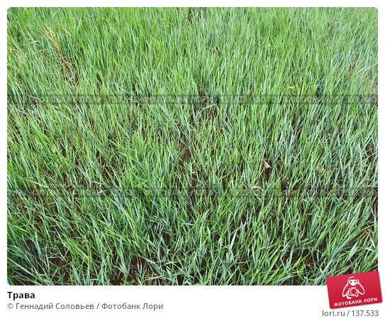 Трава, фото № 137533, снято 21 июня 2007 г. (c) Геннадий Соловьев / Фотобанк Лори