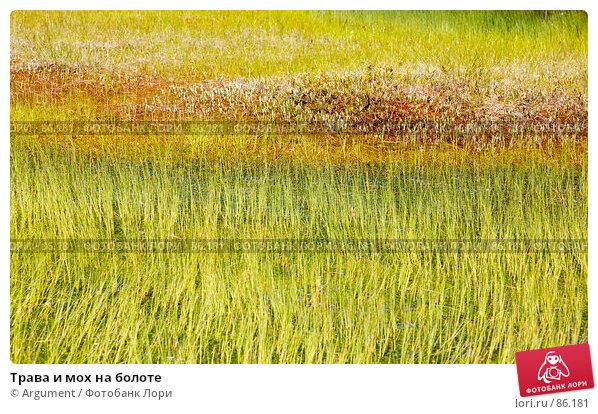 Трава и мох на болоте, фото № 86181, снято 23 июня 2007 г. (c) Argument / Фотобанк Лори