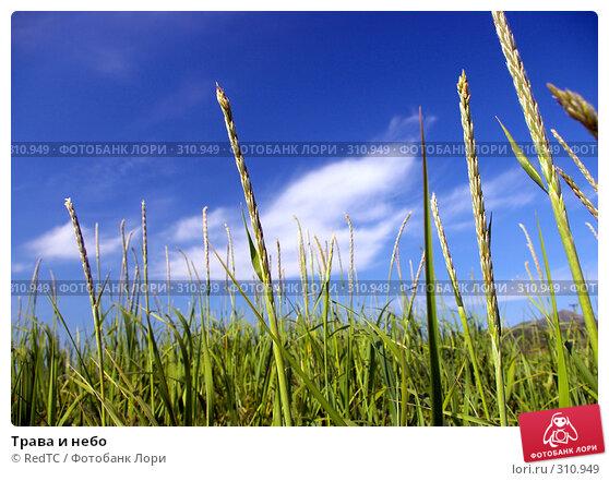 Трава и небо, фото № 310949, снято 4 июня 2008 г. (c) RedTC / Фотобанк Лори