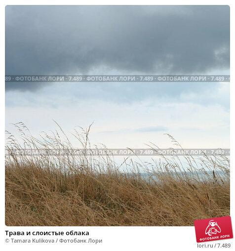 Трава и слоистые облака, фото № 7489, снято 11 августа 2006 г. (c) Tamara Kulikova / Фотобанк Лори