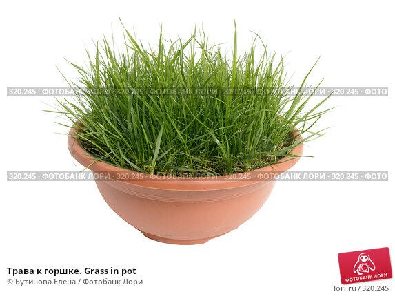 Трава к горшке. Grass in pot, фото № 320245, снято 20 января 2008 г. (c) Бутинова Елена / Фотобанк Лори