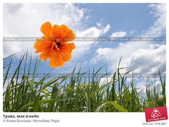 Трава, мак и небо, фото № 314941, снято 2 июня 2008 г. (c) Елена Блохина / Фотобанк Лори