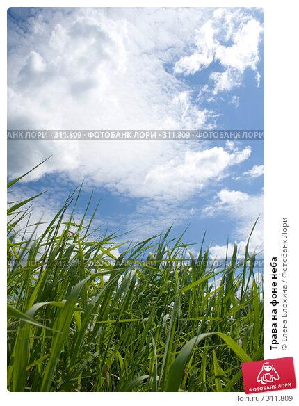 Трава на фоне неба, фото № 311809, снято 2 июня 2008 г. (c) Елена Блохина / Фотобанк Лори