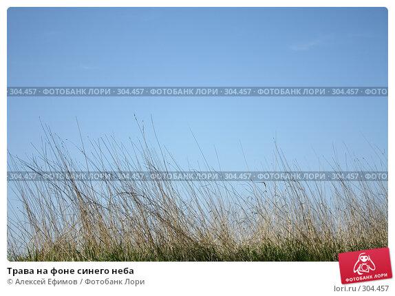 Трава на фоне синего неба, фото № 304457, снято 24 мая 2008 г. (c) Алексей Ефимов / Фотобанк Лори