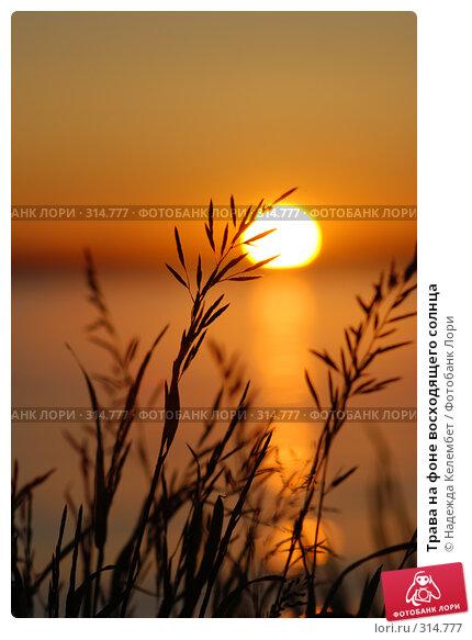 Трава на фоне восходящего солнца, фото № 314777, снято 11 июня 2007 г. (c) Надежда Келембет / Фотобанк Лори