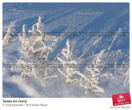 Трава на снегу, фото № 130233, снято 18 декабря 2005 г. (c) Serg Zastavkin / Фотобанк Лори