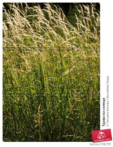 Трава на солнце, фото № 118773, снято 30 июня 2007 г. (c) Татьяна Белова / Фотобанк Лори