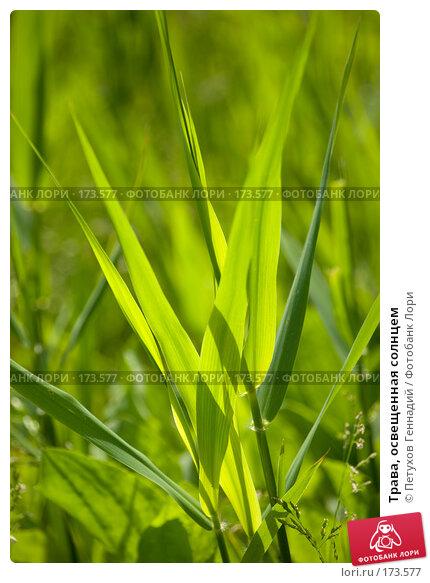 Трава, освещенная солнцем, фото № 173577, снято 29 мая 2007 г. (c) Петухов Геннадий / Фотобанк Лори