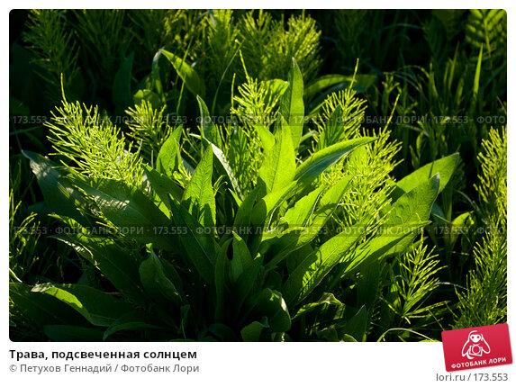 Трава, подсвеченная солнцем, фото № 173553, снято 26 мая 2007 г. (c) Петухов Геннадий / Фотобанк Лори
