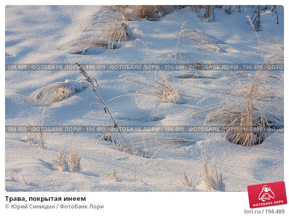 Купить «Трава, покрытая инеем», фото № 194489, снято 6 января 2008 г. (c) Юрий Синицын / Фотобанк Лори
