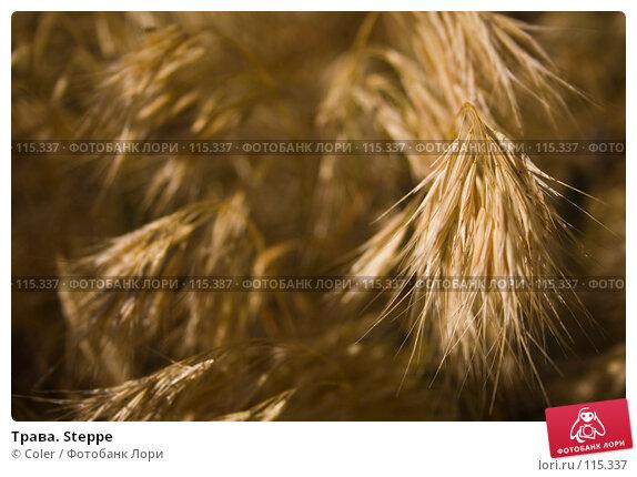 Купить «Трава. Steppe», фото № 115337, снято 6 июня 2007 г. (c) Coler / Фотобанк Лори