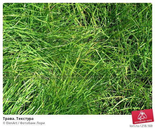 Трава. Текстура, фото № 218169, снято 26 июля 2017 г. (c) ElenArt / Фотобанк Лори