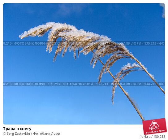 Трава в снегу, фото № 130213, снято 18 декабря 2005 г. (c) Serg Zastavkin / Фотобанк Лори