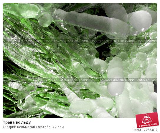 Купить «Трава во льду», фото № 255017, снято 14 апреля 2008 г. (c) Юрий Бельмесов / Фотобанк Лори