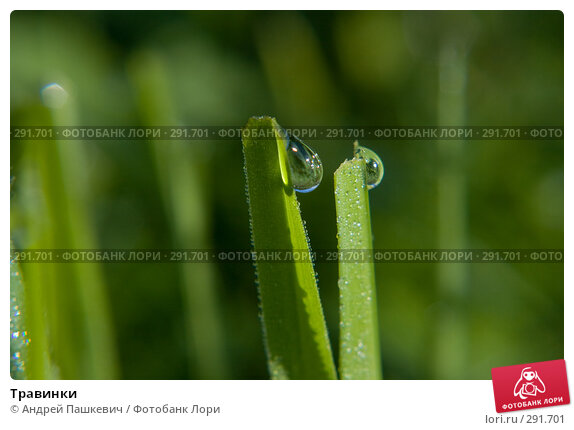 Травинки, фото № 291701, снято 29 марта 2017 г. (c) Андрей Пашкевич / Фотобанк Лори