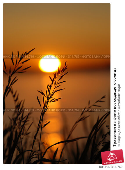 Травинки на фоне восходящего солнца, фото № 314769, снято 11 июня 2007 г. (c) Надежда Келембет / Фотобанк Лори