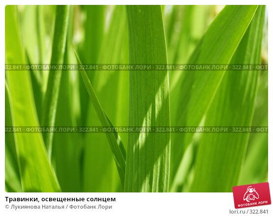 Купить «Травинки, освещенные солнцем», фото № 322841, снято 10 июня 2008 г. (c) Лукиянова Наталья / Фотобанк Лори