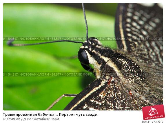 Травмированная бабочка... Портрет чуть сзади., фото № 54517, снято 7 мая 2007 г. (c) Крупнов Денис / Фотобанк Лори