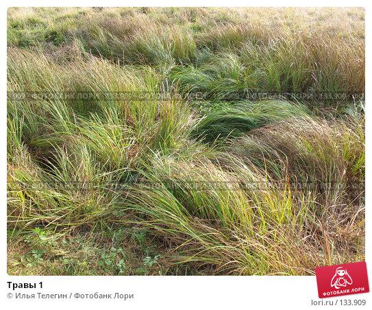 Травы 1, фото № 133909, снято 6 октября 2007 г. (c) Илья Телегин / Фотобанк Лори
