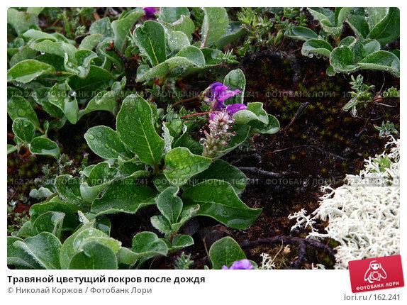 Травяной цветущий покров после дождя, фото № 162241, снято 26 июня 2007 г. (c) Николай Коржов / Фотобанк Лори