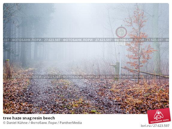 Купить «tree haze snag resin beech», фото № 27623597, снято 26 июня 2019 г. (c) PantherMedia / Фотобанк Лори