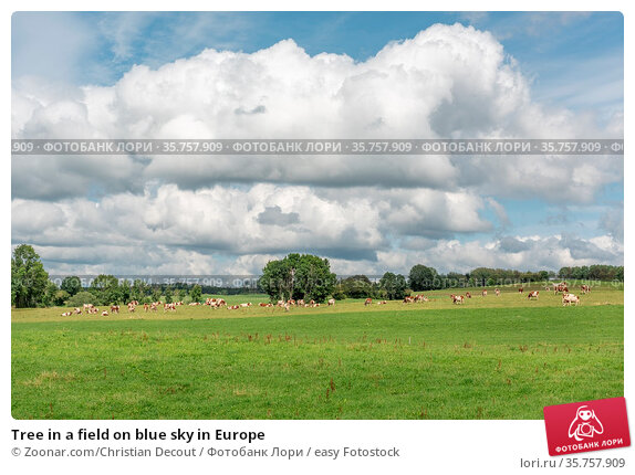 Tree in a field on blue sky in Europe. Стоковое фото, фотограф Zoonar.com/Christian Decout / easy Fotostock / Фотобанк Лори