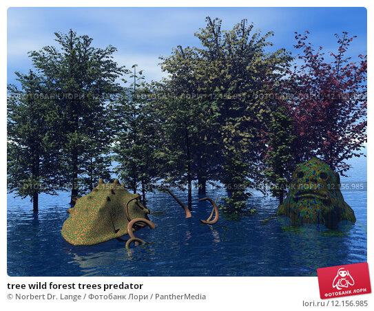 Купить «tree wild forest trees predator», фото № 12156985, снято 26 апреля 2019 г. (c) PantherMedia / Фотобанк Лори