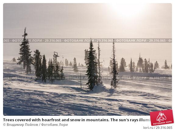 Купить «Trees covered with hoarfrost and snow in mountains. The sun's rays illuminate the trees.», фото № 29316065, снято 20 ноября 2018 г. (c) Владимир Пойлов / Фотобанк Лори