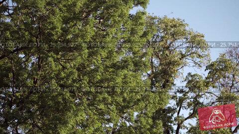 Trees in a city, видеоролик № 25794977, снято 1 марта 2016 г. (c) Алексей Макаров / Фотобанк Лори