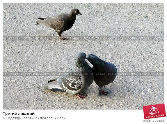 Третий лишний, фото № 27641, снято 20 апреля 2006 г. (c) Надежда Болотина / Фотобанк Лори