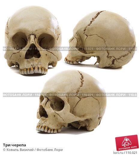 Три черепа, фото № 110021, снято 19 января 2017 г. (c) Коваль Василий / Фотобанк Лори