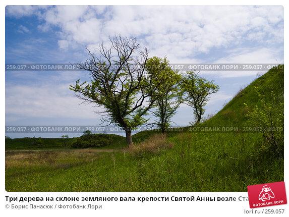 Три дерева на склоне земляного вала крепости Святой Анны возле Старочеркасска Ростовской области, фото № 259057, снято 19 апреля 2008 г. (c) Борис Панасюк / Фотобанк Лори