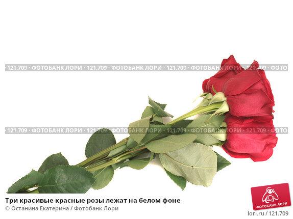 Три красивые красные розы лежат на белом фоне, фото № 121709, снято 12 октября 2007 г. (c) Останина Екатерина / Фотобанк Лори