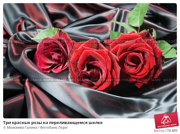 Купить «Три красных розы на переливающемся шелке», фото № 74489, снято 20 мая 2007 г. (c) Моисеева Галина / Фотобанк Лори
