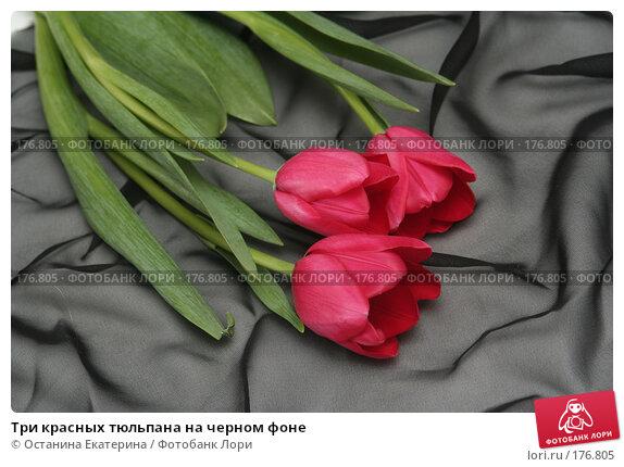 Три красных тюльпана на черном фоне, фото № 176805, снято 15 января 2008 г. (c) Останина Екатерина / Фотобанк Лори