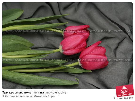 Три красных тюльпана на черном фоне, фото № 208757, снято 15 января 2008 г. (c) Останина Екатерина / Фотобанк Лори
