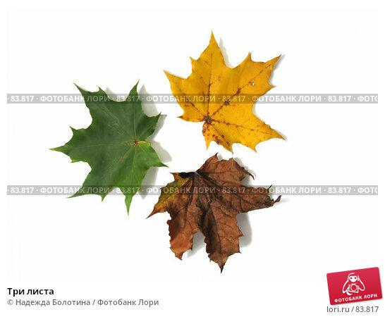 Три листа, фото № 83817, снято 7 октября 2006 г. (c) Надежда Болотина / Фотобанк Лори